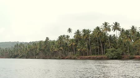 arambol : Tropical river at sunny day Stock Footage