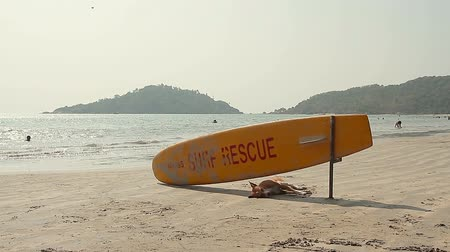 surf : Dog sleeping under Surf Rescue surfboard on the beach Dostupné videozáznamy
