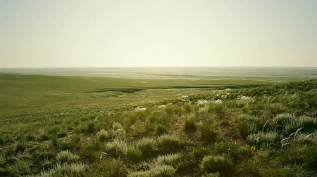 estepe : green steppe at sunny day