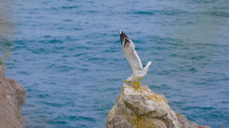 racek : Seagull standing on a rock by the sea
