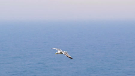gaivota : a seagull flying in the sky.