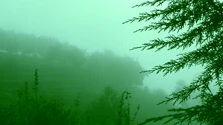 avanzar : mist moving through redwood trees on the mountains, nature background. Archivo de Video