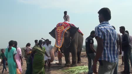 celebrity : people crowed and near elephant in local market