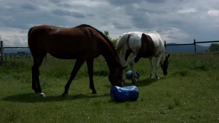 Horse grazing in Poland