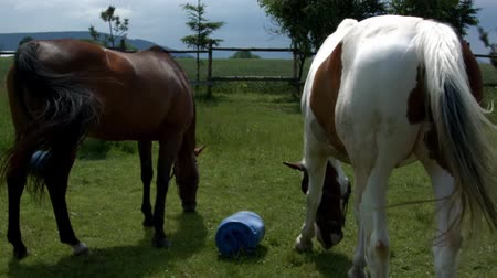 katowice : Horse grazing in Poland
