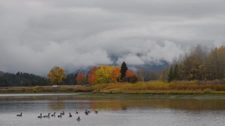 grand tetons : Grand Teton National Park Fall Colors Wild Geese Steady Shot
