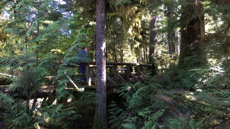 dobrar : Hiker walking on wooden foot bridge Sahalie Falls Trail Oregon