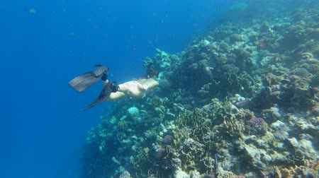 branqueamento : Tourist Snorkeling Turquoise Water and Beautiful coral reef Red Sea Egypt