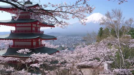 oriental cherry tree : Cherry Blossoms Swaying in the Wind in front of Mt. Fuji and a Pagoda Stock Footage