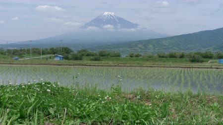 snowcapped : Mt. Fuji over Rice Paddies After Seedling Transplantation in Spring Stock Footage