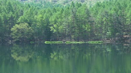 夏季 : Lush Foliage Reflected in a Pond Mishaka-ike in Nagano Prefecture, Japan 動画素材