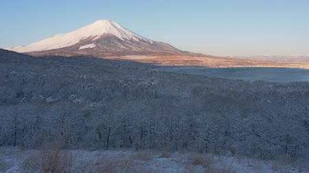 草で覆われた : Mt. Fuji over a Snowy Forest in Winter