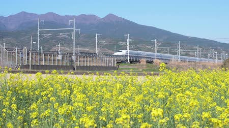 ekspres : Bullet Train Passing by a Field of Canola Flowers (slow motion)