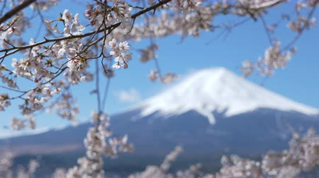 snowcapped : Mt. + Fuji + and + Cherry + Blossoms +% 28zoom +% 2B + in% 2Ffocus + pulling% 29
