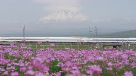 shinkansen : Bullet + Train + Passing + by + Mt. + Fuji + over + A + Field + of + Flowers +% 28panning% 29