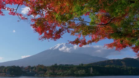 пять : Mt. Fuji with Maple Leaves