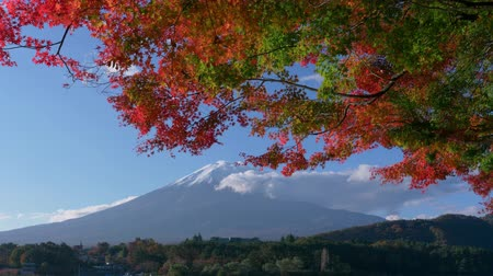 緋色 : Mt. Fuji with Maple Leaves