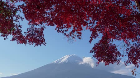 skarlátvörös : Mt. + Fuji + with + Maple + Leaves + in + Red + at + Lake + Kawaguchi + in + Autumn +% 28time + lapse% 2Ftilt + down% 29 Stock mozgókép