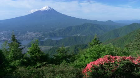 snowcapped : Mt. + Fuji + over + Lake + Kawaguchi + and + Azalea + Blossoms + in + A + Mountain +% 28w% 2F + audio% 29