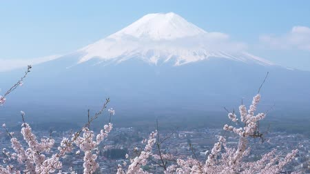 fujiyama : Mt. Fuji over Cherry Blossoms (time lapse)
