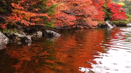 escarlate : Red Autumn Leaves Reflected in a Pond (Shirakoma-no-Ike, Nagno Pref., Japan)
