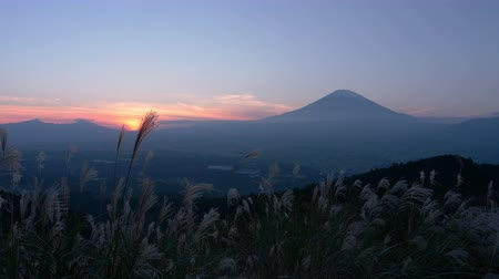 lookout point : Mt. Fuji with Silver Grass at Sunset Stock Footage