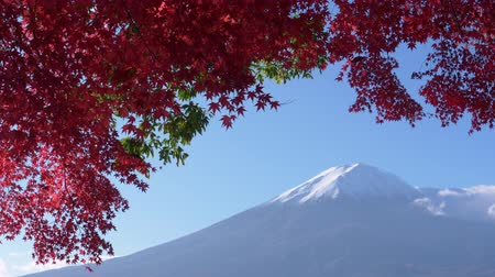 snowcapped : Mt. Fuji with Red Maple Leaves Stock Footage