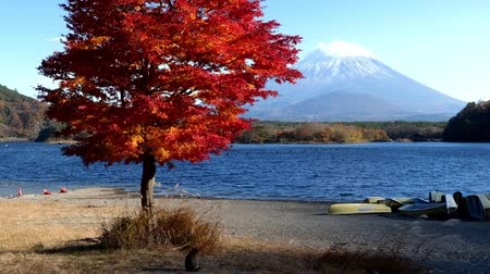 mt : Cats at a Lake near Mt. Fuji in Autumn (zoom in)
