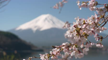 rack focus : Mt. Fuji and Cherry Blossoms at Lake Kawaguchi (Foreground to Background Rack Focusing)