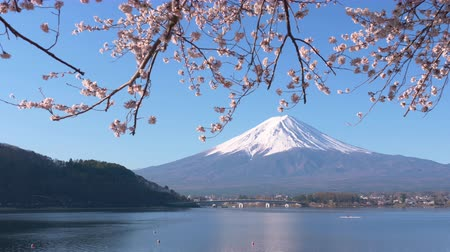 kano : Mt. Fuji and Cherry Blossoms at Lake Kawaguchi Stok Video