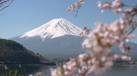 rack focus : Mt. Fuji and Cherry Blossoms at Lake Kawaguchi (Background to Foreground Rack Focusing)
