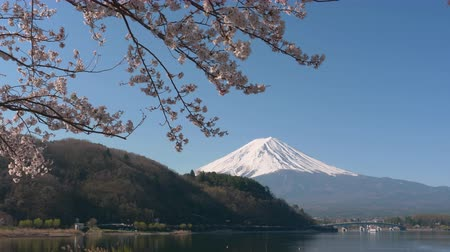 Mt. Fuji and Cherry Blossoms at Lake Kawaguchi (zoom out) Stock Footage