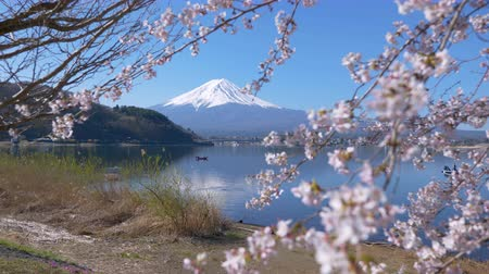 mt : Mt. Fuji and Cherry Blossoms at Lake Kawaguchi (zoom in)
