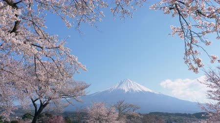 grande angular : Mt. Fuji with Cherry Blossoms on a Sunny Spring Day (Tilt Down)