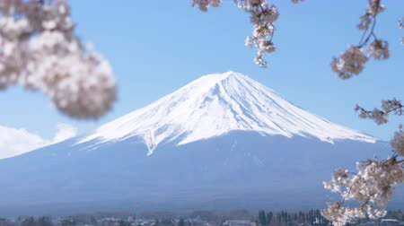 sto : Mt. Fuji under Cherry Blossoms at Lake Kawaguchi (left to right panning, rack focus)