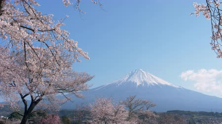 grande angular : Mt. Fuji with Cherry Blossoms on a Sunny Spring Day (Panning) Vídeos