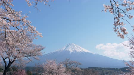 grande angular : Mt. Fuji with Cherry Blossoms on a Sunny Spring Day (Zoom Out)