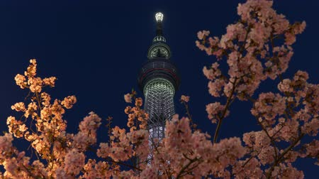 Tokyo Skytree over Cherry Blossoms in the Evening
