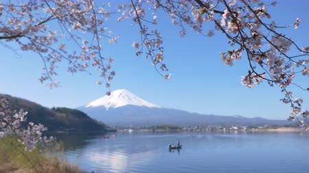 Mt. Fuji with Cherry Blossoms at Lake Kawaguchi