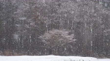 Nevando en un bosque (Focus In  Slow Motion)
