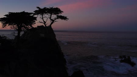 The Lone Cypress at Dawn