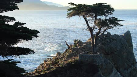 Early Morning at the Lone Cypress