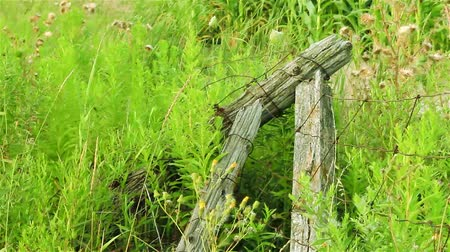 venkovský : Old broken fence surrounded by green grass in the field