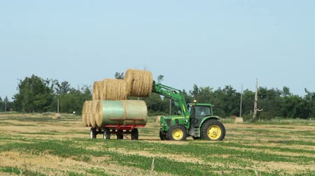 трейлер : Farmer stacking harvested bales on a trailer