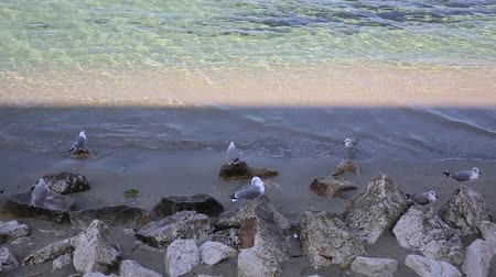 eau : Gulls on the beach Stock Footage