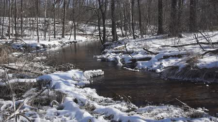 ток : In the dead of winter a small, spring-fed trout stream stays ice-free even though it is surrounded by snow and the temperature is well below freezing.   Water runs clean and clear in this little creek. Стоковые видеозаписи