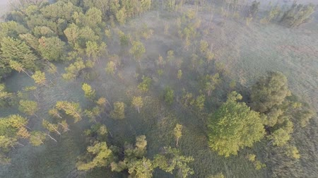 pantanal : Rearward moving low altitude aerial video of early morning over mash and swamp wetlands.  A mist of fog clings close to the ground creating a peaceful, calm mood. Stock Footage