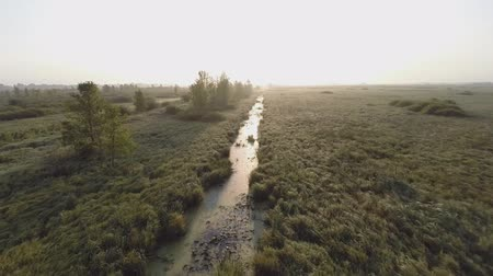 pantanal : Very low altitude, fast moving aerial video of early morning over a drainage ditch running through a marsh wetland into the sun and fog.