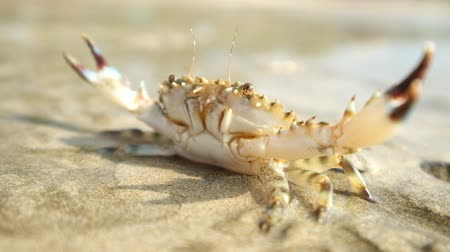 краб : Crab at tropical ocean beach