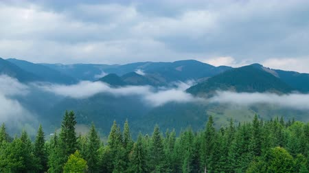 карпатская : Time lapse clouds moving over pine tree highland forest. Foggy morning landscape at Carpathian mountains. Ukraine destinations and nature Стоковые видеозаписи